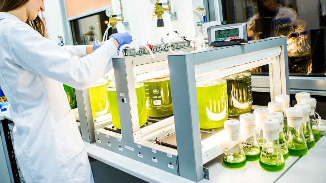 Mikroalgi – jakie mają znaczenie dla przemysłu?